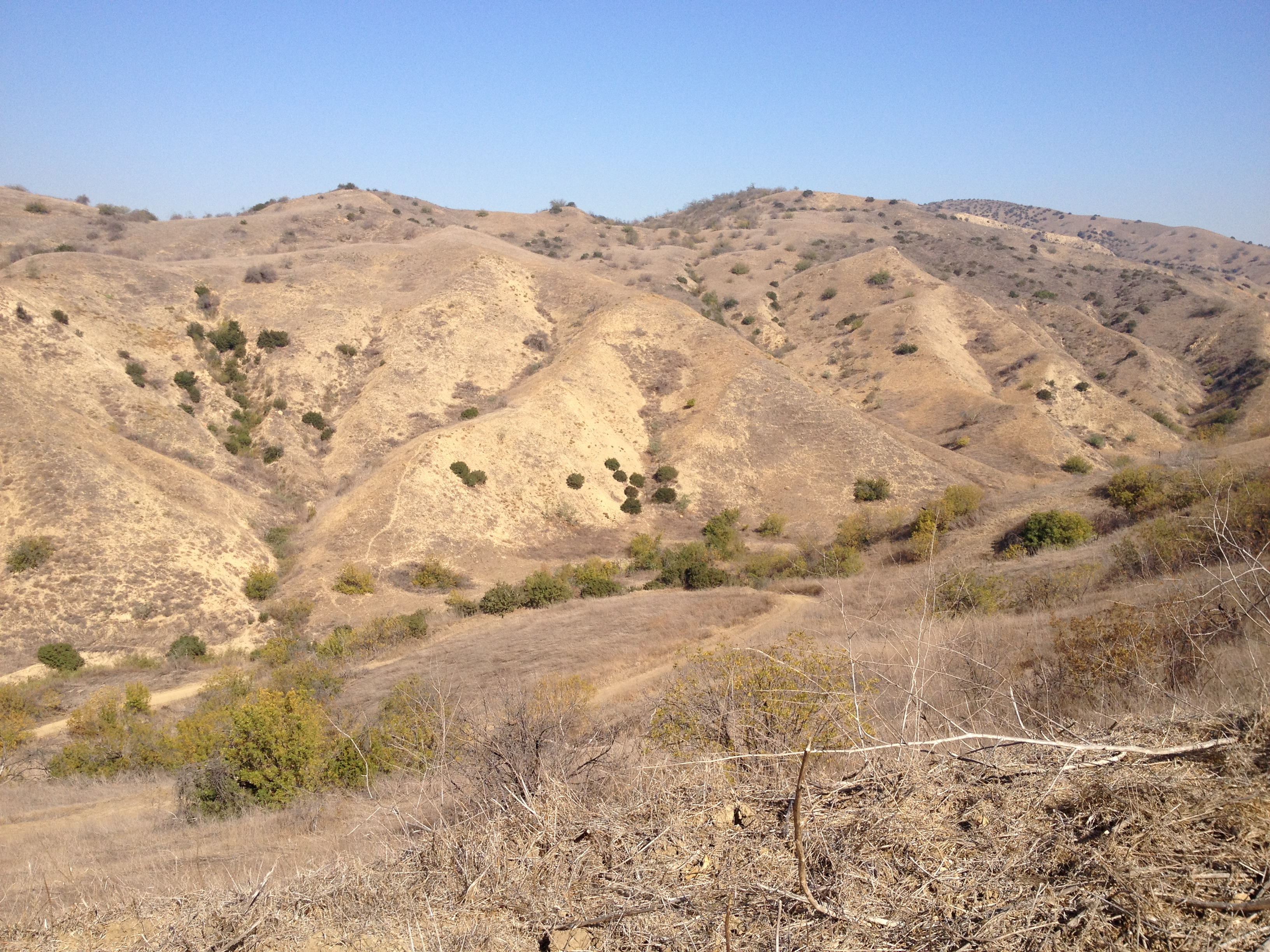 chino hills state park Safari party children's event, special event (childrens) saturday august 18,  2018 1:00 pm join us for some safari fun at barnes & noble chino hills we will.